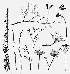set silhouettes flowers and grass on the vector image