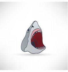 Shark sign vector