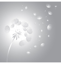 Abstract fluffy dandelion flower vector image