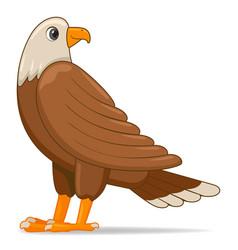 bald eagle bird on a white background vector image