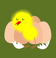 Egg and chicken Furry chick hatched from an egg vector image