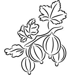 Gooseberry vector