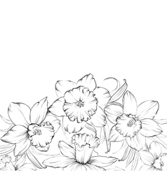 Narcissus flowers isolated on white background vector image