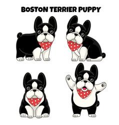 set boston terrier puppy dog vector image