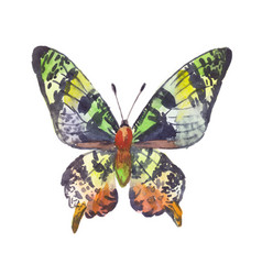 green butterfly watercolor vector image vector image