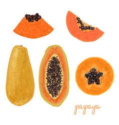 hand drawn delicious papaya vector image