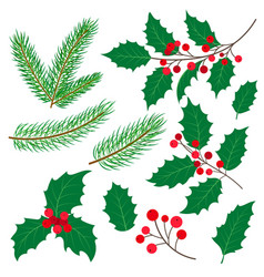 Fir tree branches mistletoe leaves and berries vector