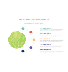 green cabbage infographic template concept with vector image