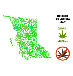 Royalty free marijuana leaves composition british vector