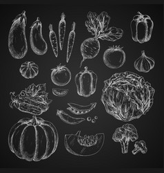 vegetables isolated icons sketch vector image