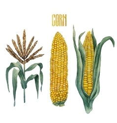 Watercolor corn collection vector
