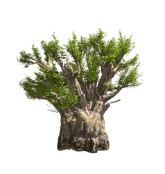 Baobab tree isolated vector