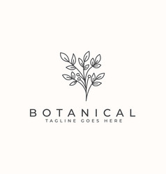 botanical flower monoline logo template vector image