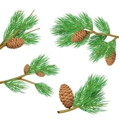 Pine branches set vector