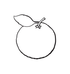 Whole shiny ripe grapefruit orange with a leaf vector
