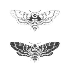with hand drawn dead head moth two variants vector image