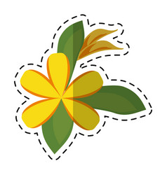 Cartoon plumeria flower decoration icon vector