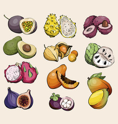 Hand drawn exotic summer fruit healthy food vector