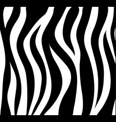 zebra stripes black and white abstract background vector image