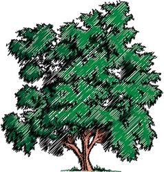 Sketch of a tree vector image vector image