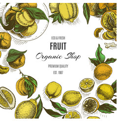 Banner for eco store colorful citrus card vector