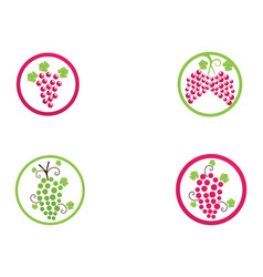 Grape purple and green vector