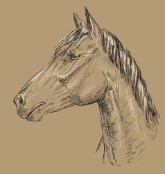 Horse portrait-16 on brown background vector