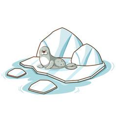 little seal on iceberg on white background vector image