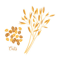 oats cereals grain spikes and grains oats vector image
