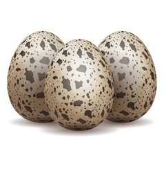 Quail eggs isolated vector image