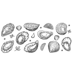 Sea oyster shell sketch isolated set on white vector