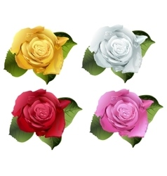 Set rose flower bud vector