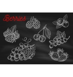 Berries chalk sketch icons on blackboard vector image vector image