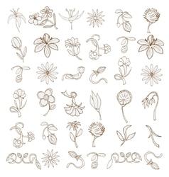 Doodles Flowers collection vector image vector image