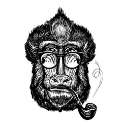 hand-drawn portrait of funny monkey with glasses vector image