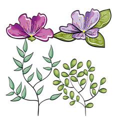 beautiful flowers design vector image