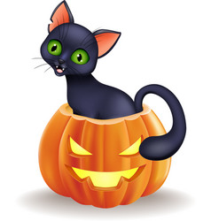 Cartoon black cat sitting in halloween pumpkin vector