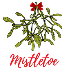 Hand drawn mistletoe sprigs with berries and red vector