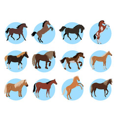 Horses colourful banner in blue circles on white vector