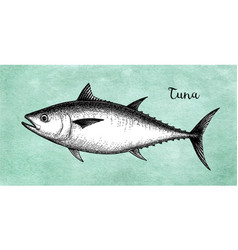 ink sketch of tuna vector image