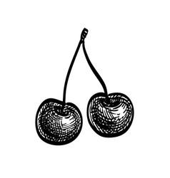 ink sketch sweet cherry vector image