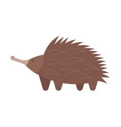 flat style of echidna vector image vector image