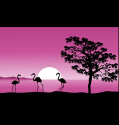 collection flamingo at sunset background vector image vector image