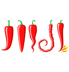 red hot peppers set vector image