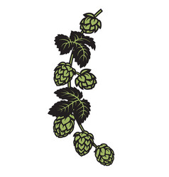 branch hops with leaves and cones design vector image