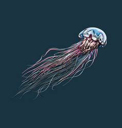 hand drawn sketch jellyfish in color on a dark vector image