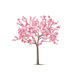 realistic sakura tree with pink petal vector image