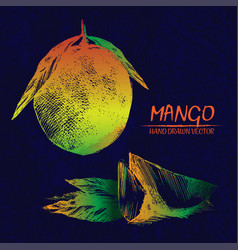 digital detailed mango hand drawn vector image