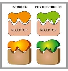 Estrogen and phytoestrogen receptors vector
