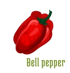 Bell pepper vegetable plant icon vector